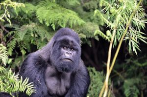 16 Days Uganda Safari Expedition